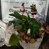 六角堂から皆様へのクリスマスプレゼント