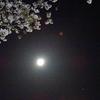 月は満月、桜は満開。かすみがうら4日前の満足ラン!