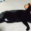 ◆猫砂問題