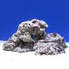 (海水魚)ライブロック M−Lサイズミックス(5kg)(形状お任せ) 沖縄別途送料 北海道航空便要保温