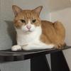 【猫ブログ】奇跡の一枚。 たかし篇