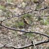 野鳥の変化から春が近いことに気付く(大阪城野鳥探鳥 2017/03/11 5:55-11:50)
