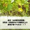 札幌から余市オススメ果物狩り:「山本観光果樹園」でぶどう・桃狩りは8月末~9月前半が熱い。