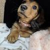 犬の多頭飼い暮らし日記:「里親さんと会いました」