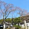 【京都】【御朱印】『三宝寺』に行ってきました。京都観光 京都旅行 国内旅行 御朱印集め 社寺めぐり