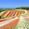 【GOTO×JR割×自治体割】2泊3日で函館→小樽→旭川 北海道旅行を予約してみた🚃