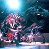 ヒューストン観光 見どころスポット自然科学博物館