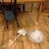掃除機で吸えないゴミには無印良品のほうき+フロアーシートの組合せが