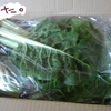 食べチョクでオーガニック野菜セットをお取り寄せ【山口県・とみおか自然農園】