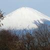 富士山に救われた足柄峠走~静岡マラソン3週前
