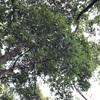 小牧山の照葉樹林①