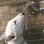 【子犬の躾|33】ピィ子が吐き出したものは【誤飲・誤食に気を付けて】