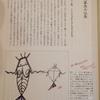 書籍:フラワー・オブ・ライフ 第一巻 「(常識から見た)例外的事実の収集」