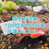 たにログ092  【必見】ダイソー多肉をオススメする理由が分かる紅葉姿