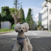 あさんぽ@夏への道の途中