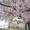 5歳児娘と桜を見ながらの散歩道 より。