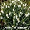 カンケンバックのレビュー記事がカムバック!2月によく読まれた記事ベスト5