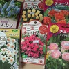 春の花の球根、買うなら今ですよ〜!