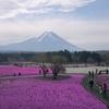 早朝3時に起きて富士芝桜まつりを見学。混雑と渋滞を回避