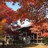 もみじ寺でおなじみ、犬山寂光院と紅葉を見てきました。