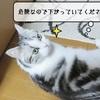 猫雑記 ~すずめ、邪気を感じる~