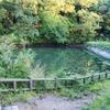 おしどり池(新潟県関川)