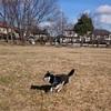 広い公園で遊んできました(^.^)