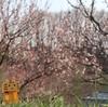 【雑記】去年歩いた4月の北海道