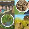 短編童話 Animal Camouflage - いきものの保護色について学ぼう!