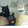 きょうのネコたちと「ネコメンタリー 猫も、杓子(しゃくし)も。」特別編
