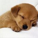 早く寝る方法 ~快適な睡眠のためにやってはいけないこと