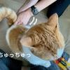 またまたおしりにうんちをつけた愛猫と、ちゅーるは偉大だというお話。