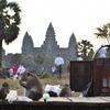 アンコールワットと猿/カンボジア