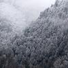 雪空の下のカヤクグリ