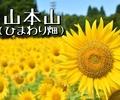 2年に一度!この時季だけ!小千谷市の「山本山」のひまわり畑へ