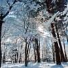 2017那須 冬の森。