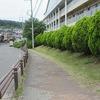 校舎南側の樹木剪定
