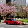 札幌の桜とブリッツェン