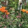 百合の花のシーズン到来