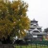 熊本城の大イチョウ、もうすぐ見頃