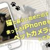 猫と暮らし始めたので余ってるiPhoneをペットカメラ化してみた