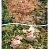 赤辛鍋とテキトー朝御飯。