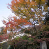 京都 紅葉100シリーズ 錦織りなす紅葉 三千院