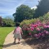 Queen Mary's Gardensのバラ