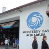 水産資源について考える モントレー湾水族館