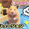 【ハムスター 動画】ハムスターが恋愛レボリューションを踊るとクセが強すぎて笑える!Hamster dances love revolution!