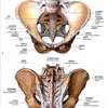 骨盤の評価