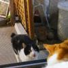 外猫と愛猫のその後