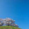 天空に咲く桜