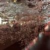 目黒川沿いを上流に向かい、そぞろ歩いた夜【花見】